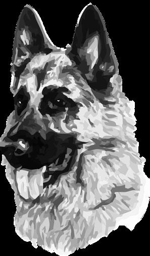 dog-1475428_640